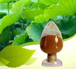 100% Natural Powder 5% Nuciferine Lotus Leaf Extract Powder Approved GMP Standard
