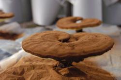Natural Organic Lucid Ganoderma Fruit Extract Powder Mainly Used to Enhance Immunoregulation