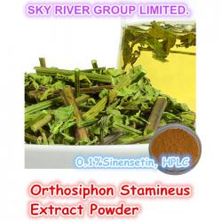 china Natural Producto Saludable Orthosiphon hierba Stamineus extracto en polvo ( 0,1 % sinensetina ) proveedor