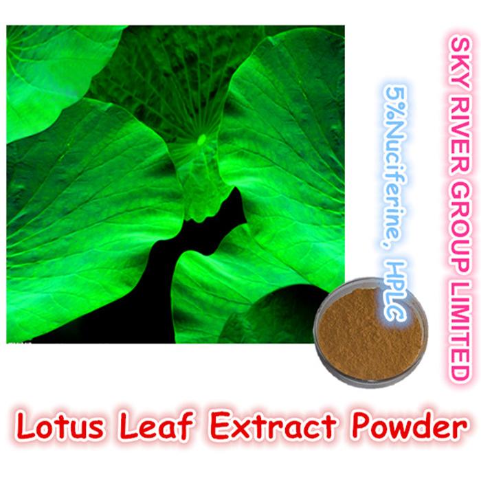 중국  연꽃 잎 식물 분말 원료 고순도 GMP 표준 새로 고침 몸 의 압축을 풉니 다 공급