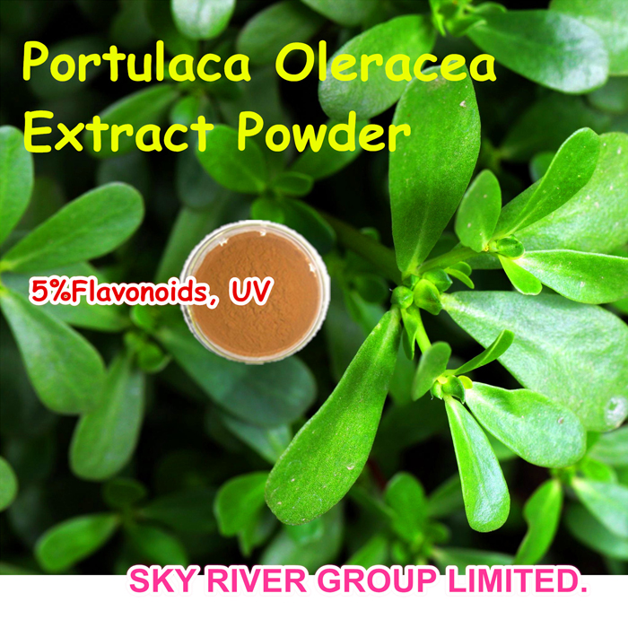china Natural Portulaca Oleracea Extract 5% Flavonoids None Pesticides with Antihypertensive Effects supplier