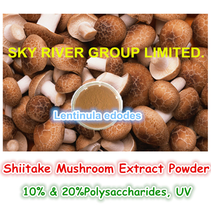 china Calidad garantizada Shiitake seta micelio Extract Powder saludable Natural proveedor