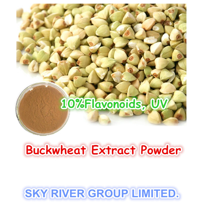 중국  GMP 표준 과 건강 관리 천연 순수 메밀 씨앗 추출 분말 없음 살충제 공급